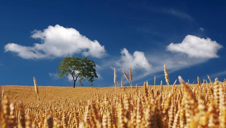 Момент Мински для агробизнеса Украины